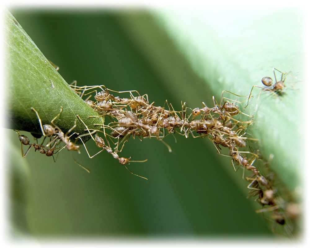 3 Lessons from Foraging Ants; Biomimicry in Business