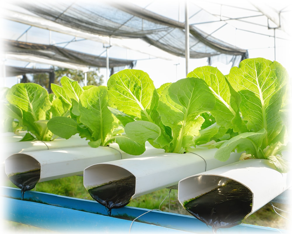Aquaponics: A New Wave of  Sustainable Agriculture